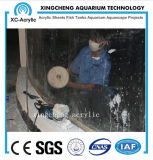Projet acrylique transparent personnalisé d'aquarium de construction de fournisseur d'aquarium
