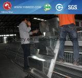 Heißer galvanisierter automatischer Huhn-Rahmen für wachsende Bratroste und Schichten (A3L90)