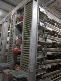 Gaiola automática limpa fácil da camada da galinha da venda quente