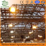 トマトのための高い耐衝撃性の光起電温室