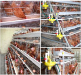 Cage automatique de poulet de matériel de volaille de batterie