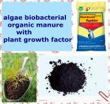 Fertilizante da alga com ácido aminado para o crescimento de plantas