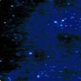 Pellicola di immersione di stampa di trasferimento dell'acqua di disegno #7 della galassia di Yingcai idro