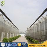식물성 재배지를 위한 다중 경간 플레스틱 필름 온실