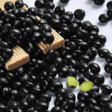 새로운 작물 Hebei 기점 HPS 검은 콩 검정 신장 콩