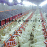 Breeder automatique Raising Equipment pour Poultry Farming House
