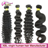 Xbl Hair Factory Offer Different Types des Menschenhaars