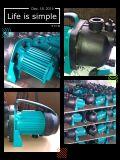(SDP600-1) Edelstahl-Haushalts-Dienstpumpe für Garten-Bewässerung