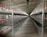 Cage de grilleur de poulet