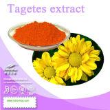 Poudre normale d'extrait de 100% Tagetes (lutéine de 20%, 2.5% Zeaxanthine)