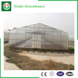 Serra commerciale della plastica di doppio strato di agricoltura