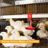 H печатает курочку на машинке батареи поднимая клетку цыпленка для цыпленка дня старого