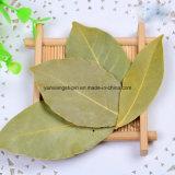 Hoja de laurel seca secada deshidratada del aire del anuncio, Pelargonium, hojas de laurel, Myrcia