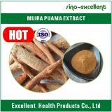 Polvo natural del extracto de la raíz de Muira Puama