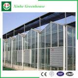 Chambre verte en verre d'envergure multi pour la plantation