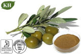 Estratto verde oliva naturale del foglio di 100% con oleuropeina 4%~60% Hydroxytyrosol 1%