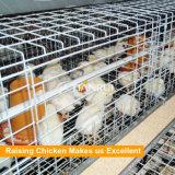 H tapent la poulette de batterie élevant la cage de poulet pour le poulet d'un jour