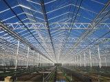 Estufa de vidro inteligente Growing vegetal das vendas de Direc da fábrica