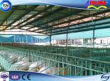 Large Poultry Casa con tubo galvanizado (SSW-H-009)