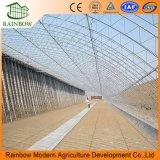 Invernaderos agrícolas de plástico de bajo costo solar