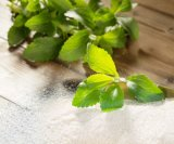 Reiner natürlicher Pflanzenstevia-Großhandelspreise auf Lager