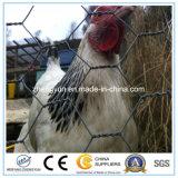 판매를 위한 직류 전기를 통한 /PVC 6각형 장식적인 치킨 와이어 메시