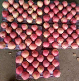 Neues Getreide roter FUJI Apple