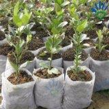 Tela não tecida dos PP Spunbond para saco Growing da semente do Seedbed da flor da planta