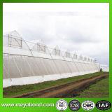Het Opleveren van het anti-insect voor het Netwerk van de Landbouw 50X25