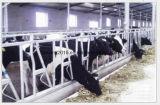 Bestiame galvanizzato della barriera dell'alimentazione del vitello che alimenta rete fissa