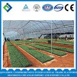 Estufa agricultural da produção da fábrica para vegetais verdes