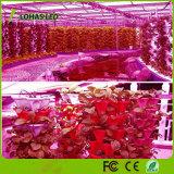 Ir-UVpanel LED wachsen für Pflanzenlicht der Gewächshaus medizinisches Veg Blumen-LED hell