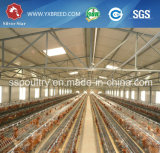 Cage de poulet de couche des fournisseurs de matériel de volaille en Afrique du Sud