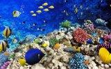Azulejos esmaltados pared hermosa del fondo del arte 3D (VPA6A102)