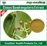 Polvere naturale dell'estratto di 100% Cissus Quadrangularis