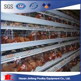 Gabbia del pollo dell'azienda avicola per la Camera di pollo