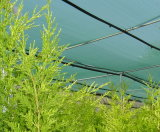 Anti-Insect Netting for Agriculture&Garden