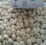 Supplier dorato di Pure White Garlic in 10kg Carton