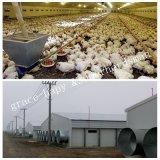 Casa prefabricada de la granja avícola con el equipo automático de las aves de corral