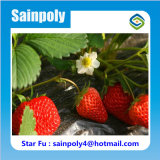딸기를 위한 추운 지역 이용된 태양 온실