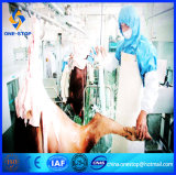 Vieh Slaughter Line Abattoir Equipment China Supplier Slaughterhouse Machine für Muslim Islamic Halal Cow Turnkey Project