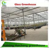 Serre chaude en plastique hydroponique de polycarbonate en verre chaud de vente pour l'agriculture