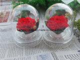 カーネーションの維持されたみずみずしい花の切りたての花のベストセラーの買物の花束はオンラインで開花する