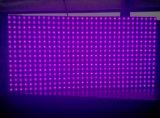 وحيدة أرجوان [ب10] خارجيّة [لد] [تإكست مودول] شاشة عرض