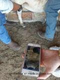 Explorador sin hilos del ultrasonido para el uso veterinario