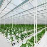 Casa verde agrícola hidropónica del Multi-Palmo de la película plástica de la alta calidad
