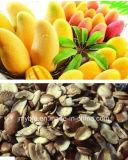 Extrait d'irvingia gabonensis de 20:1 d'extrait de graine de mangue sauvage de surveillance du poids