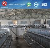 Gabbia di strato dell'azienda agricola per il pollo dell'uovo