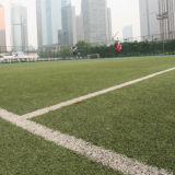 Het woon Kunstmatige Gras van het Gebied van het Voetbal
