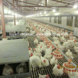Poultry automático Control Shed Equipment para Breeder